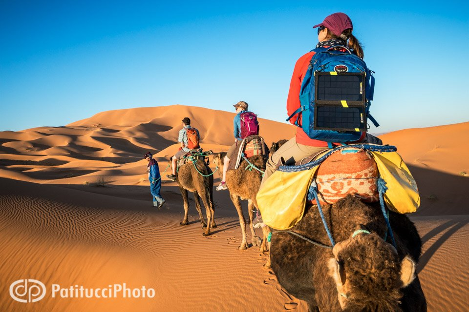 A group riding camels into the Sahara Desert from Merzouga, Morocco, while on a sand skiing trip.